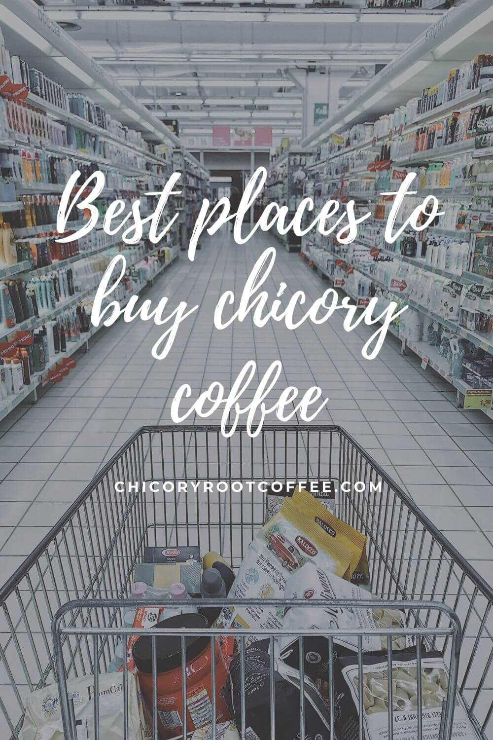best places to buy chicory coffee